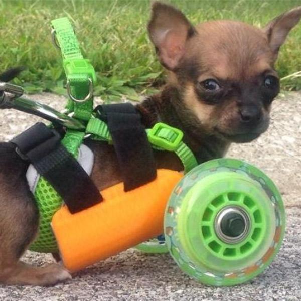3D-печать, протез, животные, Протез, напечатанный на 3D-принтере, помог собаке снова начать ходить