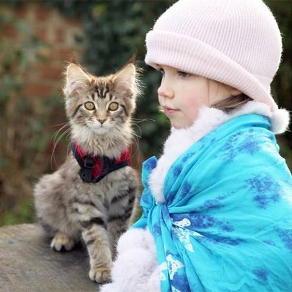 психология,животные,медицина,кошка, Как кошка Тула помогает девочке с аутизмом