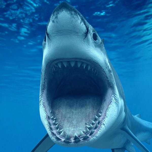 Биология, природа, животные, фауна, эволюция, 45 фактов об акулах