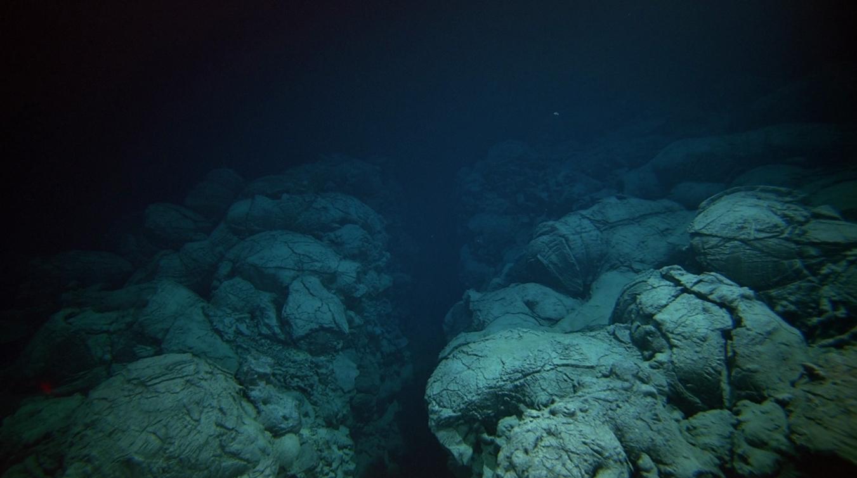 На дне океана увидели рыбу-монстра