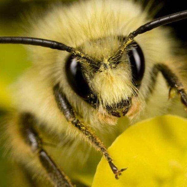 животные, климат, Замечено массовое исчезновение всех насекомых мира